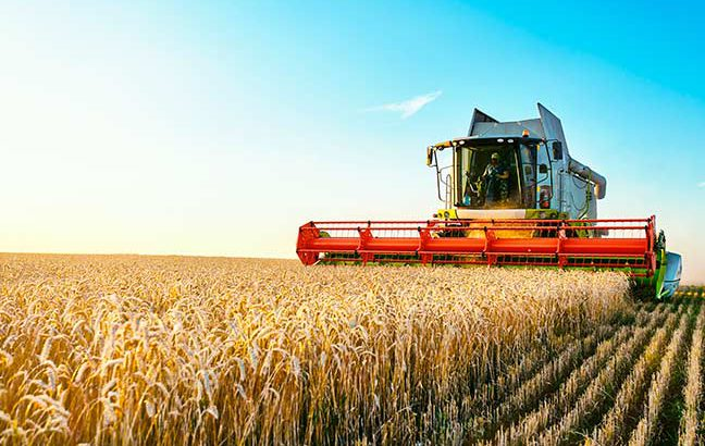 colheitadeira-colhendo-trigo